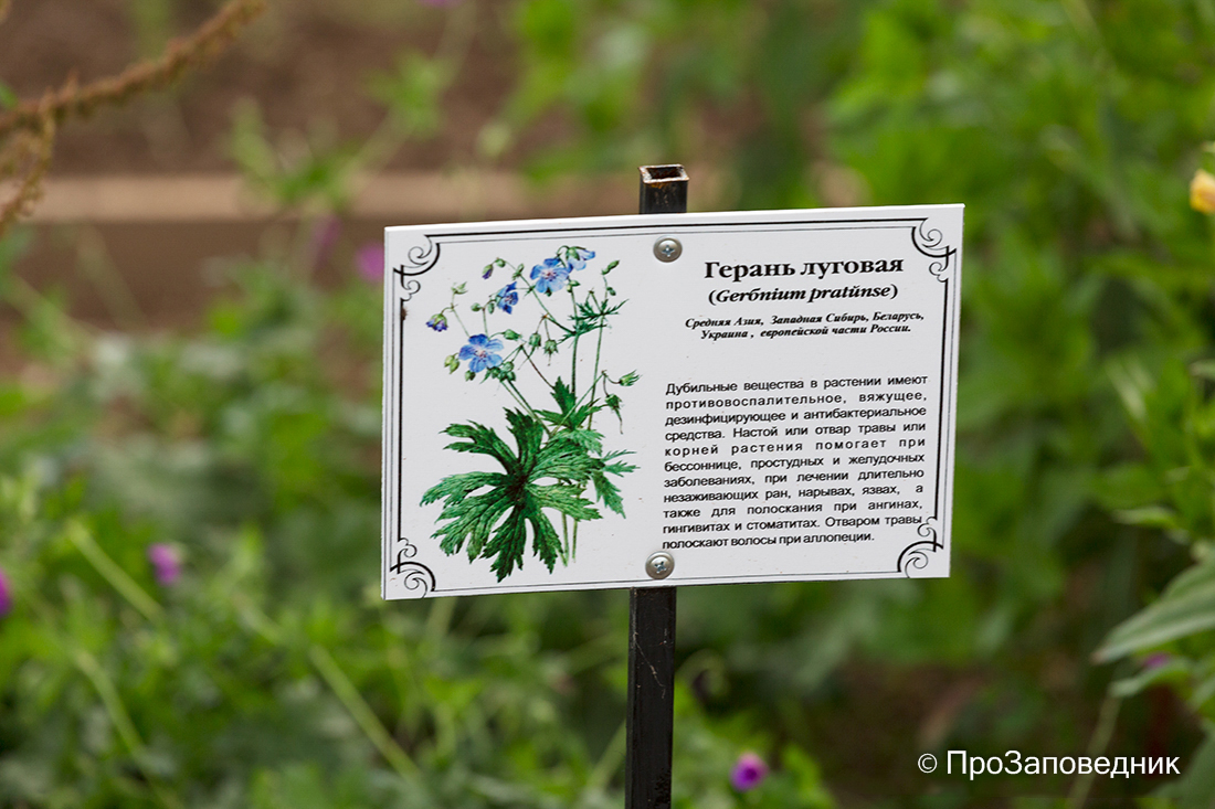 """Национальный парк """"Смоленское Поозерье"""" Аптекарский сад"""