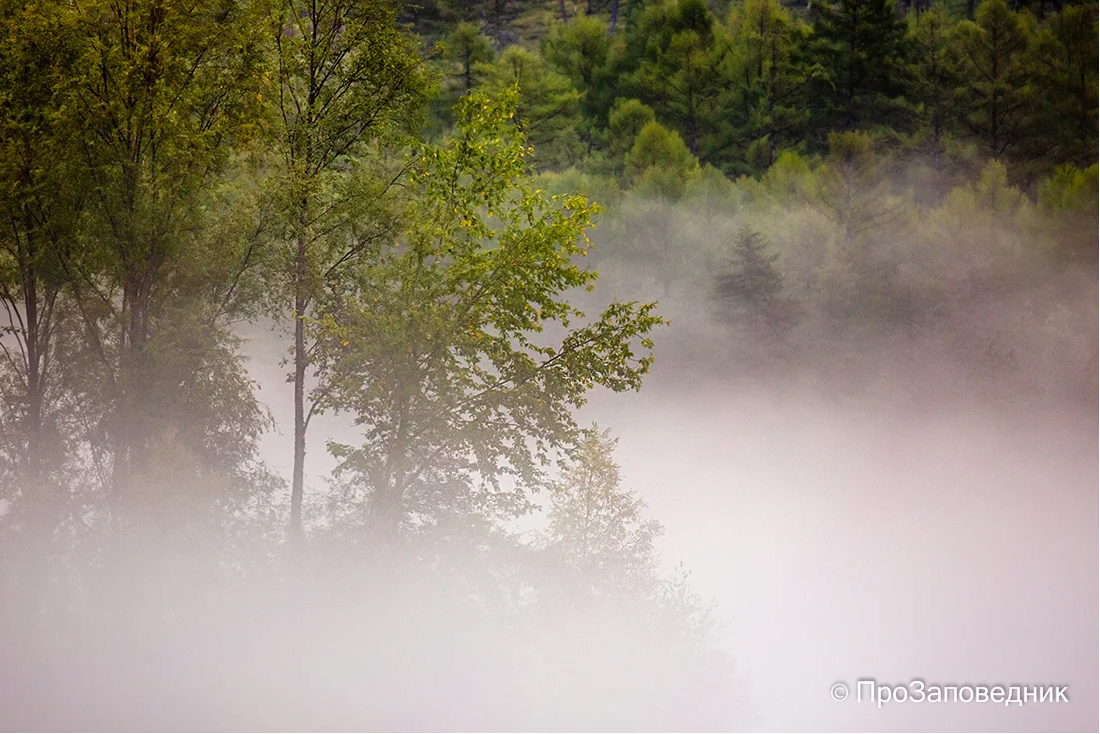 Туман на Бурее