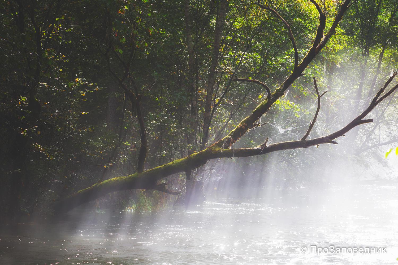 Утренний туман на Бикине