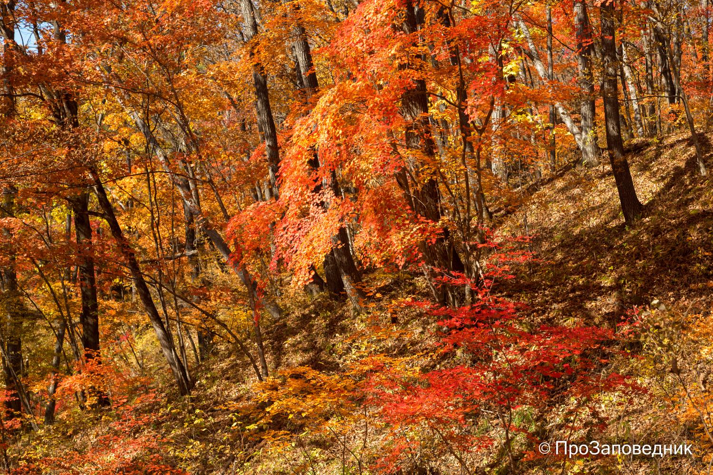 """Осень в """"Земле леопарда"""""""