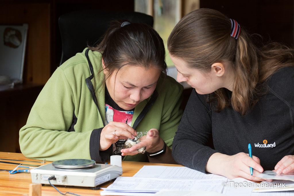 Станция кольцевания птиц Байкальская. Обучение волонтера