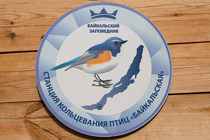 """Станция кольцевания птиц """"Байкальская"""""""