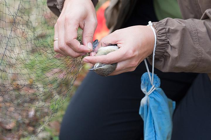 Выемка птицы из сетки