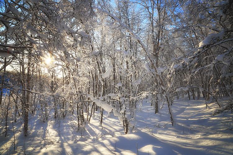 """Заповедник """"Пасвик"""" зимой"""
