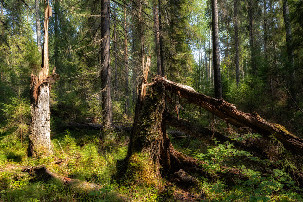 """Национальный парк """"Койгородский"""". Тайга, где не ступала нога человека"""